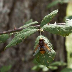 Insectos en el Nacimiento del Río Mundo