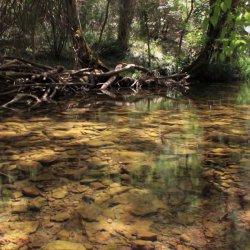 Luz en el Nacimiento del Río Mundo