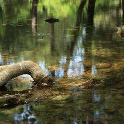 Silencio en el Nacimiento del Río Mundo