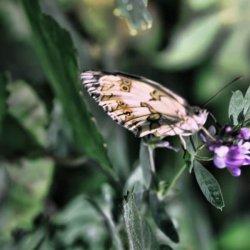 Mariposas en el Nacimiento del Río Mundo