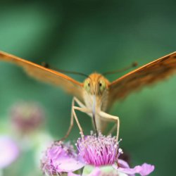 Alas de las mariposas en el Nacimiento del Río Mundo