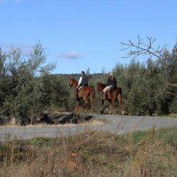 Caballos entre los caquis en Segorbe de Castellón