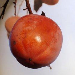 Caqui en calidad de bombilla en Segorbe de Castellón