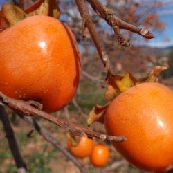Frutas en Segorbe de Castellón