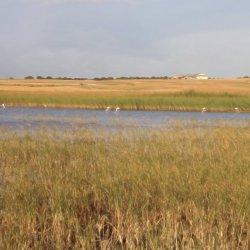 Orillas de la Laguna de Pétrola en Albacete