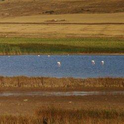 Laguna en los alrededores del pueblo Corral Rubio en Albacete