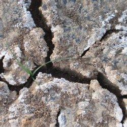 Fuerza de vida en la Laguna de Corral Rubio en Albacete