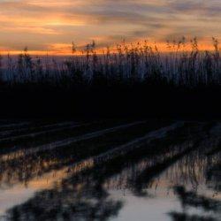 Ocasos en los campos de arroz en La Albufera de Valencia