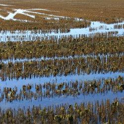 Campos de arroz en La Albufera de Valencia