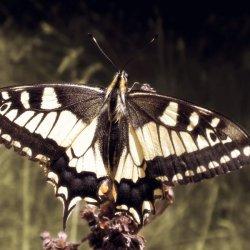 Mariposas en La Albufera de Valencia