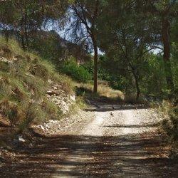 Perdices en alrededores de la presa El Cenajo en el río Segura en Albacete