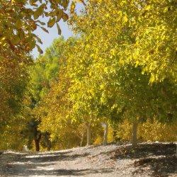 Frutales en la carretera de Las Minas a Agramón en Albacete