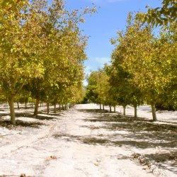 Otros frutales en la carretera de Las Minas a Agramón en Albacete