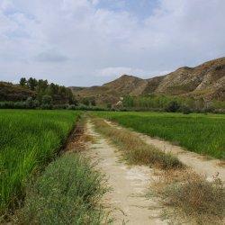 Campos de arroz en los alrededores del pueblo Las Minas en Albacete