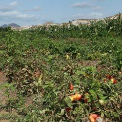 Huerta en los alrededores del pueblo Las Minas en Albacete