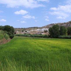 Otros campos de arroz en los alrededores del pueblo Las Minas en Albacete