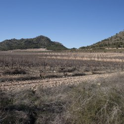 Paisaje de naturaleza en Enero en Alicante