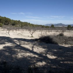 Luces de naturaleza en Enero en Alicante