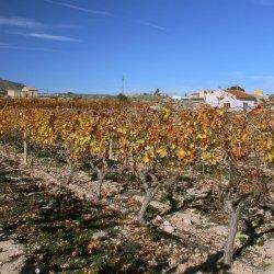 Enero en la zona de Novelda en Alicante