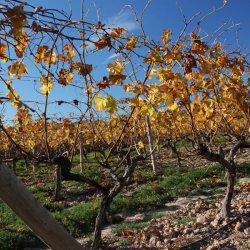 Riego de viñedos de Novelda en Alicante