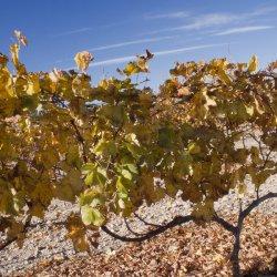 Cielo en Enero en los viñedos de Novelda en Alicante
