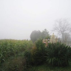 """Campos de maíz y flores en el """"Pazo de Terrafeita"""""""