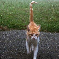 "Gato en el ""Pazo de Terrafeita"""