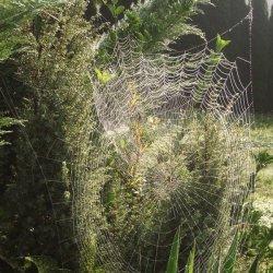 "Telas de araña en el ""Pazo de Terrafeita"""
