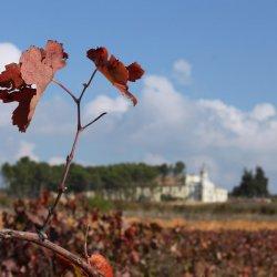 Zona vinícola de Utiel-Requena