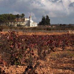 Viñedos en la zona vinícola de Utiel-Requena en Valencia