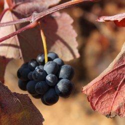 Zona vinícola de Utiel-Requena en Valencia