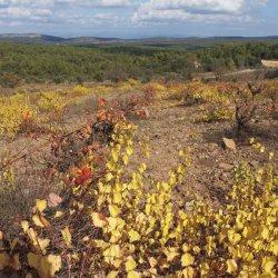 Vistas en la zona vinícola de Utiel-Requena en Valencia