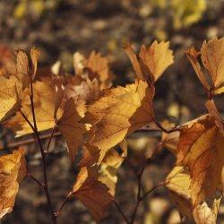 Otoño en la zona vinícola de Utiel-Requena en Valencia