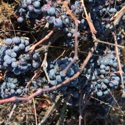 Maravillas en la zona vinícola de Utiel-Requena en Valencia