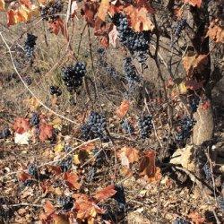 Paisajes en la zona vinícola de Utiel-Requena en Valencia