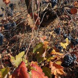 Naturaleza en la zona vinícola de Utiel-Requena en Valencia