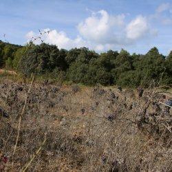 Vistas de viñedos en la zona vinícola de Utiel-Requena en Valencia